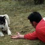 Streunerhunde_sind_oftmals_skeptisch____VIER_PFOTEN_International